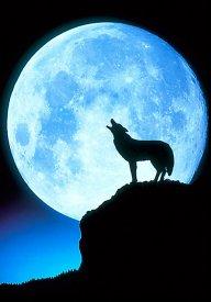 wolfmoon.hust