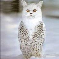 Thánh mèo