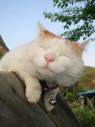 Lam Tiểu Mèo