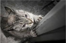 Mèo Mun