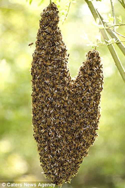 Những chú ong.