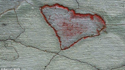 Hình nấm ở Audubon Corkscrew Swamp Sanctuary, Florida (Mỹ).