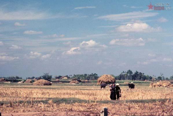 Tháng 1/1969. Cánh đồng sau vụ gặt ở Vĩnh Lộc.