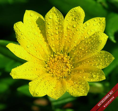 Download bộ hình nền Tết 2013 - Rực rỡ sắc hoa